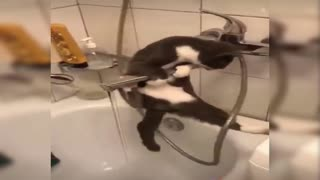 Watch the cat drink, but what happened in the end