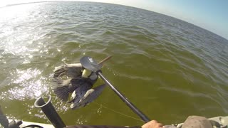 The Bird Whisperer Strikes Again! Pelican Attacks Kayak Angler! - Video