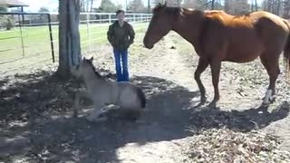 Camera Captures Baby Horse Sneezing, His Reaction Has People Crying With Laughter - Video