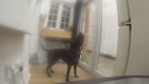 Dog really hates being left alone!