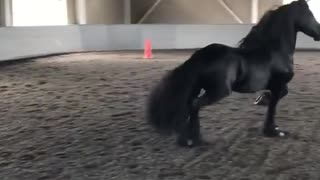 Showing Off Racing Skills From Female Arabian Racing Horse