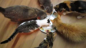 Adorable cats attempt to eat invisible tuna - Video