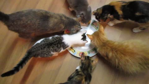 Adorable cats attempt to eat invisible tuna
