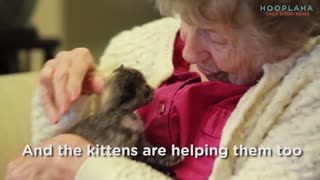 Who Will Save These Kittens?  A Memory Clinic? - Video