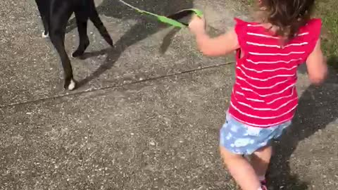 Toddler calmly walking her loving pitbull