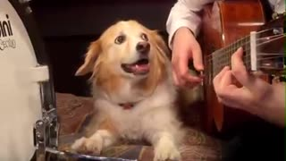 Cute Dog Knows How To Play A Percussion Instrument! - Video
