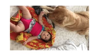 Excited Dog Tries To Relax In Order To Play With Baby - Video