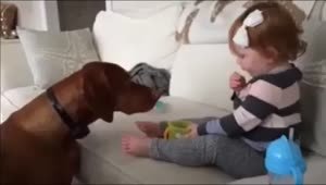 Dog attempts to steal food from baby - Video