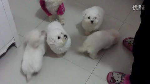 A group of hungry puppys ^^