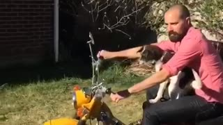 Dog rides on motorcycle