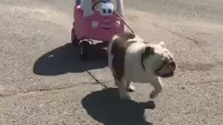 Dog pulls baby in toy - Video