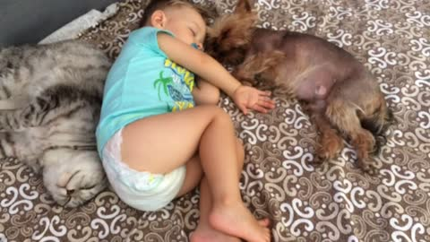 Baby, dog & cat all take sweet nap together
