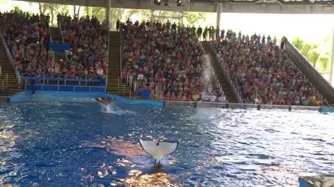 Shamu trowing water at the audience