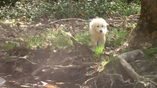 Glenda the Good Witch(Puppy) vs. Water  - Video