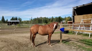 More of Zeus the Horse