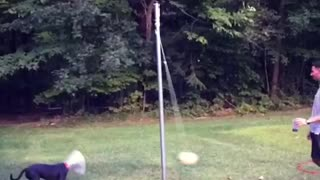 Man plays tetherball with black dog in cone - Video