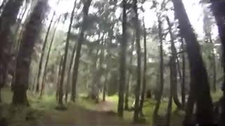 Grizzly Bear Encounter  - Video