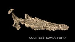 Scans Reveal Snout Nervous System Of The Mighty Pliosaur - Video