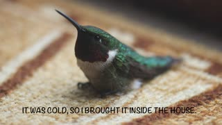 Woman rescues dying hummingbird - Video