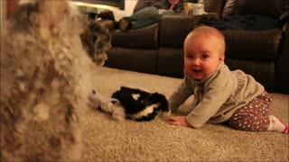 Precious baby tries to steal puppy's toys - Video