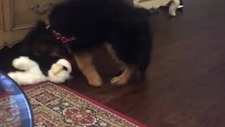 Small puppy plays with stuffed animal