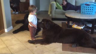 Try Not To Laugh Too Hard When You See This Toddler's Reaction After Kissing His Dog  - Video