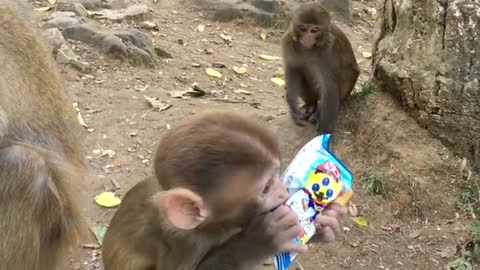 Adorable Baby Monkey At His Wit's End