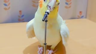 Talented parrot has extraordinary singing skills