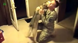 Dogs Welcoming Soldiers Home Compilation 2014 [HD] - Video
