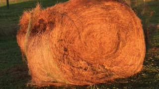 Hay Hay, What's Goin On? - Video