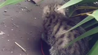 Cat and mouse playing😻😻