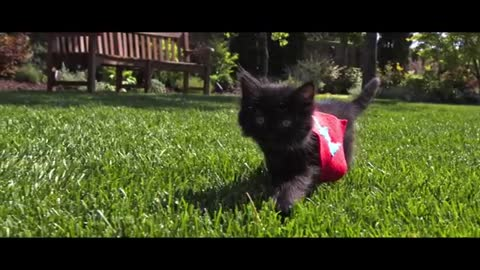 fun cat momi Fly Slow Motion