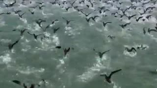 Massive flock of seabirds creates stunning visual image