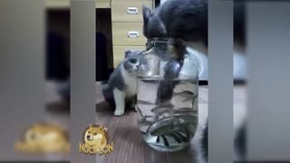 Cats catch fish in the pot