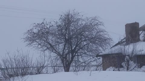 many sparrows on the tree in winter