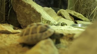 Small Pair Of Tortoise Exploring Cave