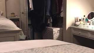 Cat knocks over chair jumps into closet - Video