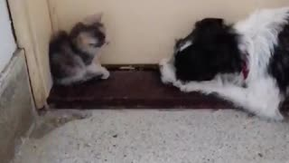 Cutie kitty and playful puppy
