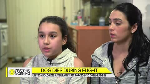 Flight Attendant Tells Mother She Has to Put Beloved Dog in Overhead Bin