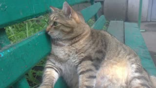 Fat Kitty Does What Fat Kitty Wants - Video
