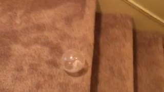 White hamster in ball rolling down staircase