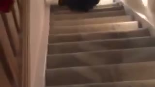 Guy with long curly hair nose dives down stairs