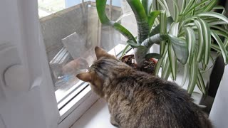 Frustrated Cat Talks to a Bird Outside - Video