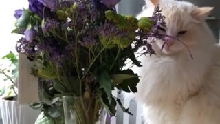 Cat Trying to Eat Flowers