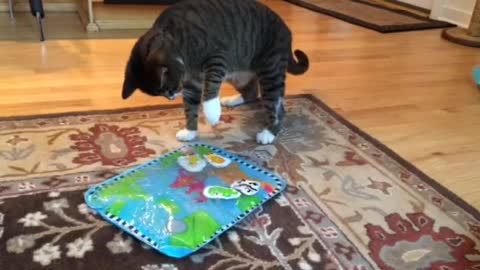 Playful cat is confused by toy fish