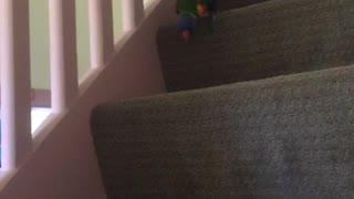 Bird walks down stairs and peeps through stairs