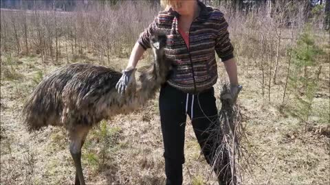 Gardening with the Emus