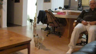 Dogs know exactly when it's time for bed - Video