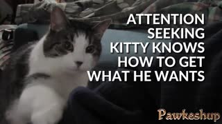 stories 02 attention seeking kitty - Video