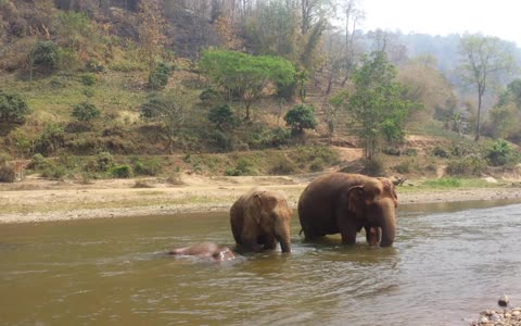 Elephant family splashes around in river